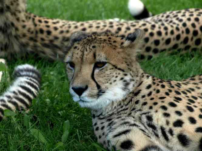 Puma vakantiekamp zonder overnachting